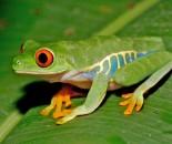 Tree Frog Slide #1