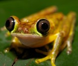 Tree Frog Slide #11