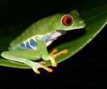 Tree Frog Slide #12