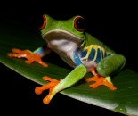 Tree Frog Slide #13