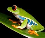Tree Frog Slide #14