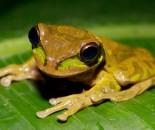 Tree Frog Slide #15