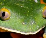 Tree Frog Slide #16