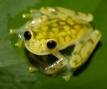 Tree Frog Slide #18