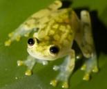 Tree Frog Slide #19