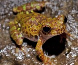 Tree Frog Slide #2