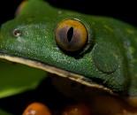 Tree Frog Slide #22