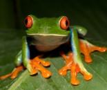 Tree Frog Slide #26