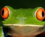 Tree Frog Slide #27