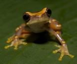 Tree Frog Slide #29