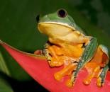 Tree Frog Slide #3