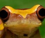 Tree Frog Slide #30