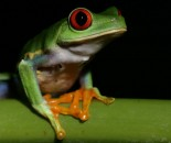 Tree Frog Slide #4
