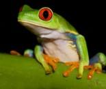 Tree Frog Slide #5