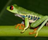Tree Frog Slide #6