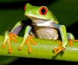 Tree Frog Slide #7